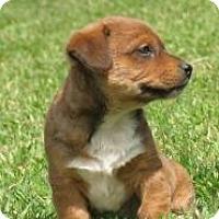 Adopt A Pet :: Billy - Hancock, MI