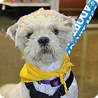 Adopt A Pet :: Bentley - Baton Rouge, LA
