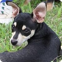 Adopt A Pet :: Phil - Ocala, FL