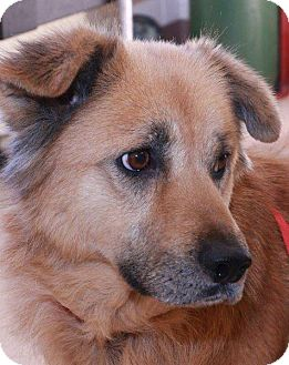 Collie Mix Dog for adoption in McDonough, Georgia - Marigold