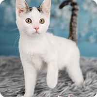 Adopt A Pet :: Ariel - Eagan, MN