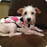 Adopt A Pet :: Mia - Surrey, BC