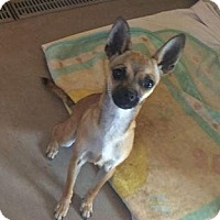 Adopt A Pet :: Bambi - Post, TX