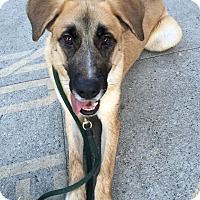 Adopt A Pet :: GEORGIA MAE - Los Angeles, CA