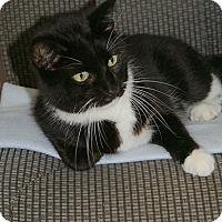 Adopt A Pet :: Dana - Englewood, FL