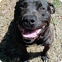 Adopt A Pet :: Timber - Blacksburg, SC