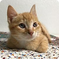 Adopt A Pet :: Stevia - Hendersonville, NC