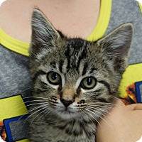 Adopt A Pet :: Flint - Greenfield, IN
