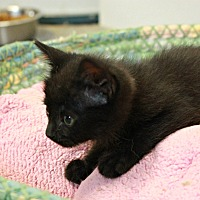 Adopt A Pet :: Mini - New Richmond,, WI