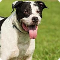 Adopt A Pet :: Tasso - Santa Fe, TX