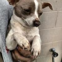 Adopt A Pet :: Grayson - Arlington, VA