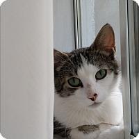 Adopt A Pet :: Tish - Toronto, ON