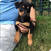 Adopt A Pet :: Jeannie - Groton, MA