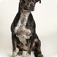 Adopt A Pet :: Echo - Baton Rouge, LA