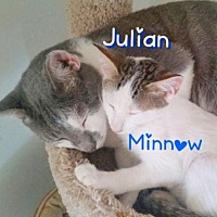 Adopt A Pet :: Julian (Bonded Pair) - York, PA
