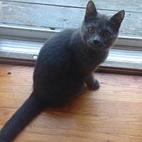 Adopt A Pet :: Clarence - Morgantown, WV