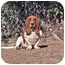 Photo 1 - Basset Hound Dog for adoption in Montgomery, Alabama - Stretch