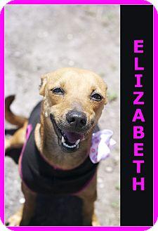 Dachshund Mix Dog for adoption in Corpus Christi, Texas - Elizabeth