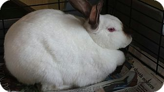 Other/Unknown Mix for adoption in Sauk Rapids, Minnesota - Bunny