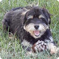 Adopt A Pet :: LEO - Salt Lake City, UT