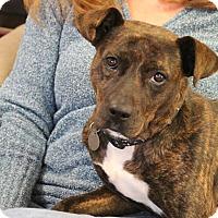 Adopt A Pet :: Gypsy Mae - Marietta, GA