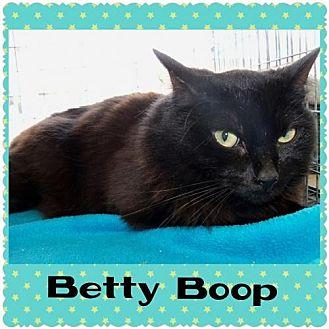 Domestic Mediumhair Cat for adoption in Walnut Creek, California - Betty Boop