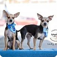Adopt A Pet :: Rico - Shawnee Mission, KS