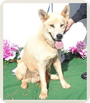 German Shepherd Dog Mix Dog for adoption in Marietta, Georgia - BROOKLYN