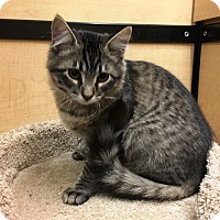 Adopt A Pet :: Skylar - Riverside, CA