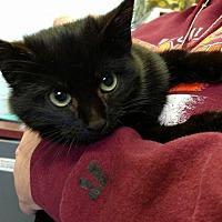 Adopt A Pet :: India (aka INDY)-Fostered - Rustburg, VA
