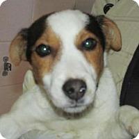 Adopt A Pet :: Billy - Rocky Mount, NC