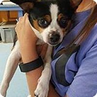 Adopt A Pet :: Milo - Nesquehoning, PA