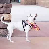 Adopt A Pet :: Emma - Chandler, AZ