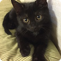 Adopt A Pet :: Batman - Richmond, VA