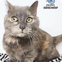 Adopt A Pet :: B.K. - Knoxville, TN