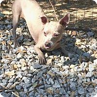 Adopt A Pet :: Cara($75) - Redding, CA
