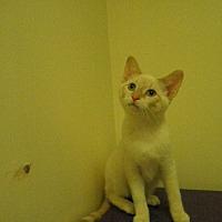 Adopt A Pet :: Divinity - Milwaukee, WI