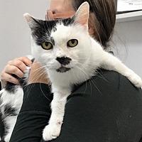 Adopt A Pet :: Dee Dee - Sherman Oaks, CA
