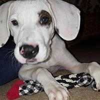 Adopt A Pet :: Grommit - Alpharetta, GA