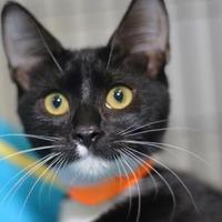 Adopt A Pet :: Ryobi - Baton Rouge, LA