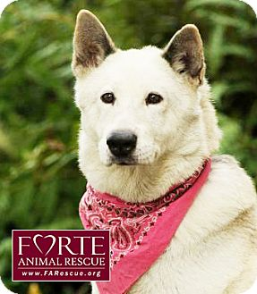 Husky/Kishu Mix Dog for adoption in Marina del Rey, California - Cheyenne