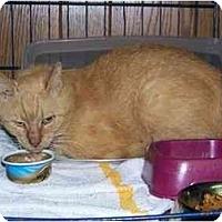 Adopt A Pet :: Oscar - Syracuse, NY
