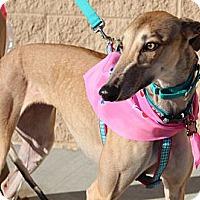 Adopt A Pet :: Sidepockettwist