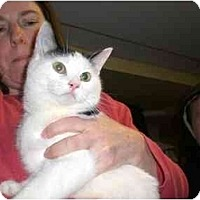 Adopt A Pet :: Polly - Lombard, IL