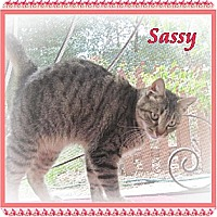 Adopt A Pet :: Sassy - Orange City, FL