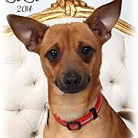 Adopt A Pet :: Jojo - New Orleans, LA
