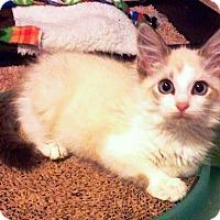 Adopt A Pet :: Vinnie - Edmond, OK