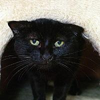 Adopt A Pet :: Ricci - Tucson, AZ