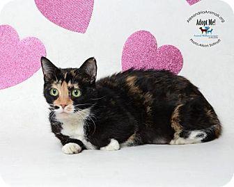 Domestic Shorthair Cat for adoption in Alexandria, Virginia - Wanda