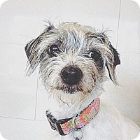 Adopt A Pet :: Nalah - Orange, CA